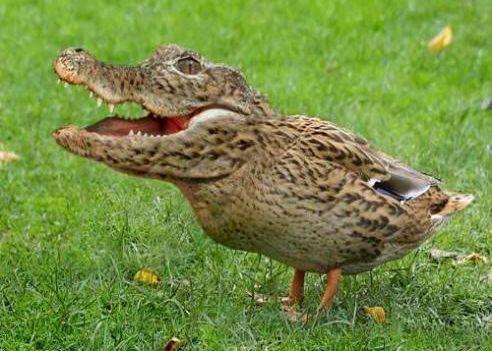 crocoduck (2)