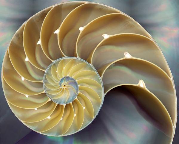 shellperry