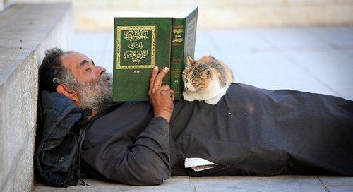 reading_cat