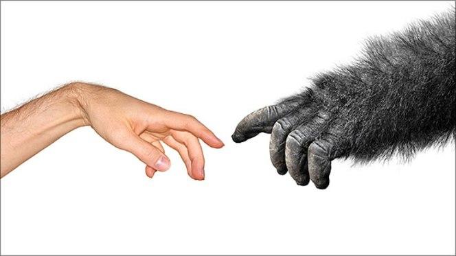 evolutietheorie-natuurlijke-selectie-ontdekgodnl